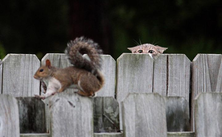 Фотографии животных от DayEvents