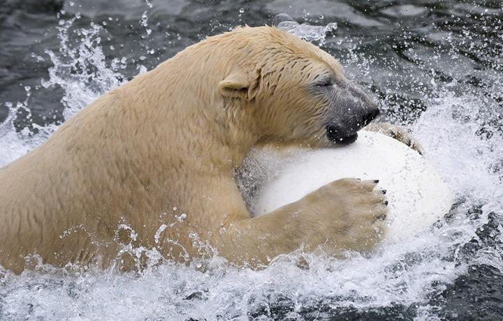 Фотографии животных от DayEvents #24