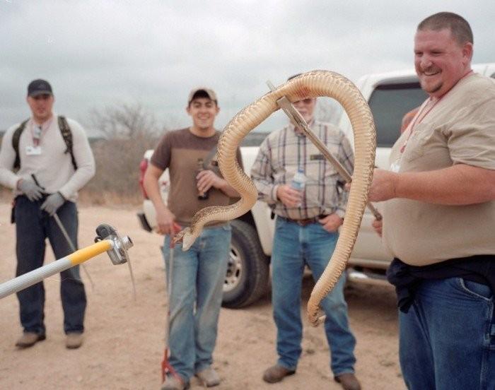 Фестиваль ядовитых змей