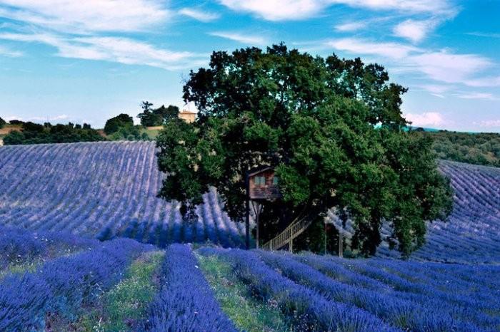 Дом на дереве: отдых в Италии