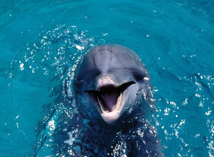 Дикие дельфины и другие обитатели республики Маврикий