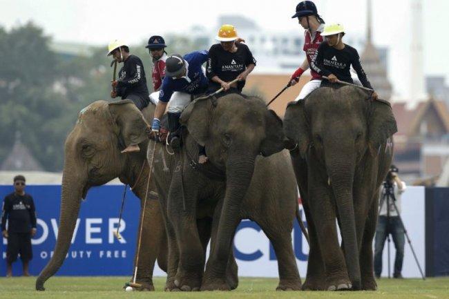 Спорт со слонами: поло