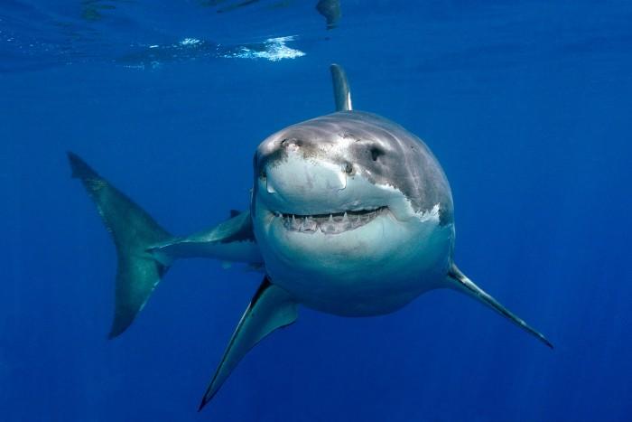 В одной клетке с акулой (видео)