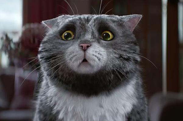 Хитом интернета стала реклама с новогодним котиком