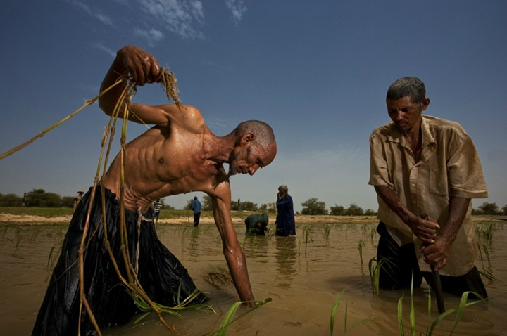 Племя кочевников из Сахары