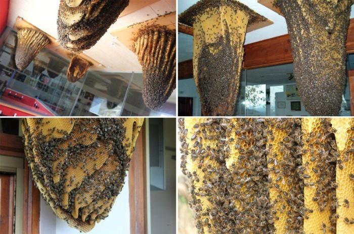 Испанский музей пчёл