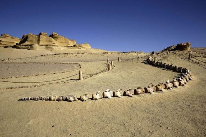 Первый музей ископаемых на Ближнем Востоке