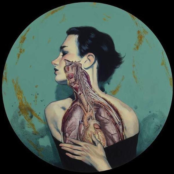 Серия анатомических работ от Fernando Vicente