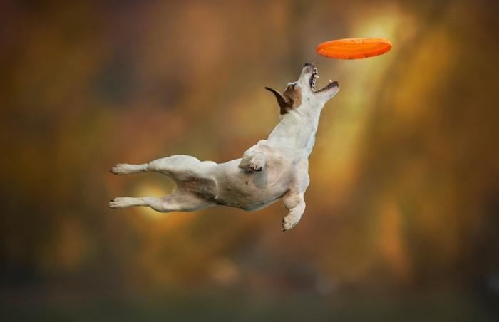 Собаки в воздухе – интересные фотографии