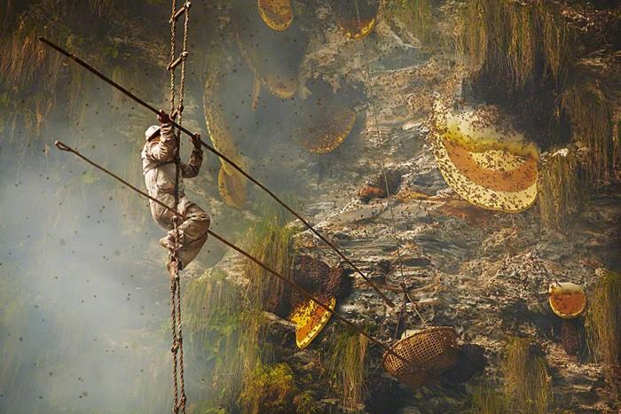 Жизнь или мёд? Или как собирают мёд в Непале