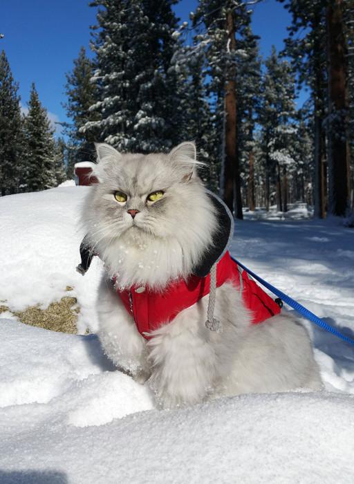 Путешествия кота Гэндальфа