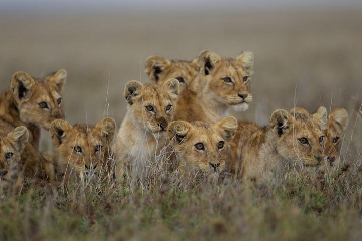 Фотографии животных от DayEvents #13