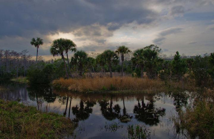 Победители фотоконкурса Focus on Nature