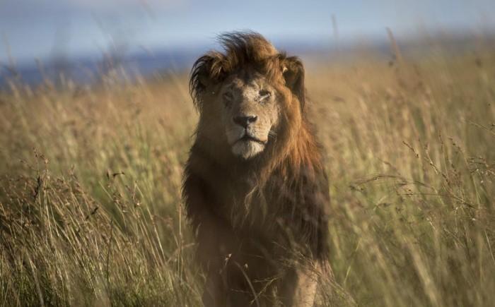 2015 год в фотографиях: животные