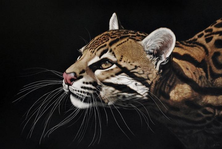 Животные портреты Heather Lara
