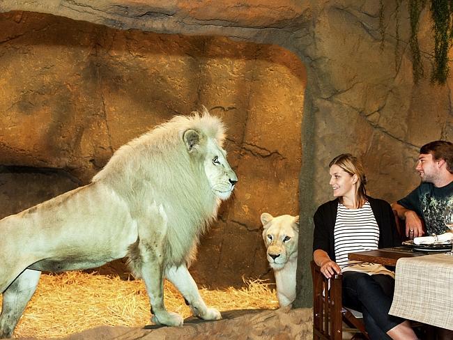 Новый зоо отель в Австралии