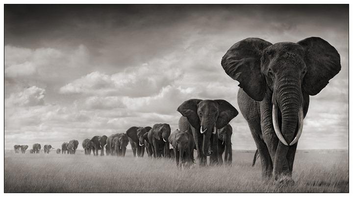 Диких животных из восточной африки
