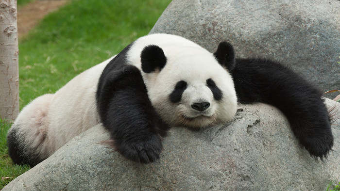 10 фактов о пандах