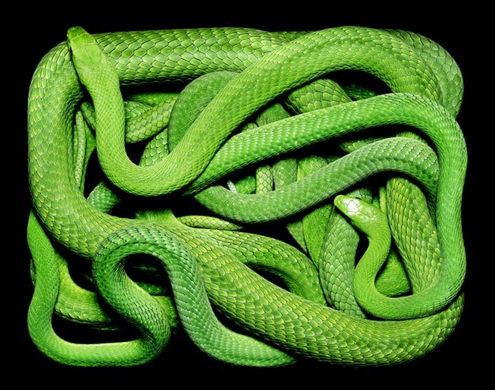 Змеиная коллекция от Гвидо Мокафико