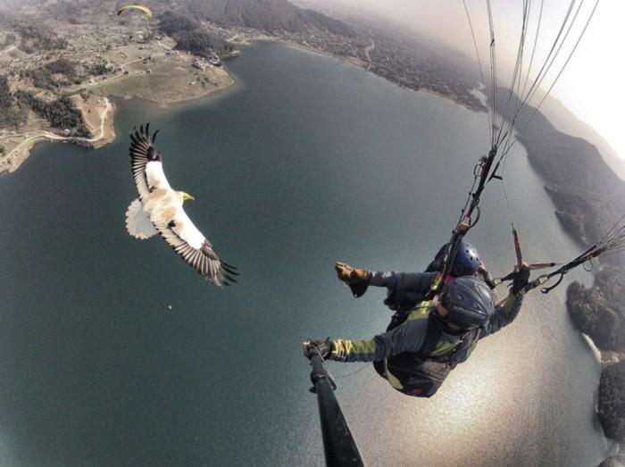 Полет с птицами: Parahawking