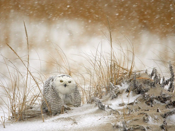 Красочные фотографии животных от National Geographic