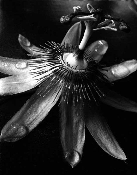 Великолепные примеры черно белых фотографий