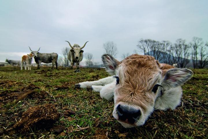 Фотографии животных от National Geographic