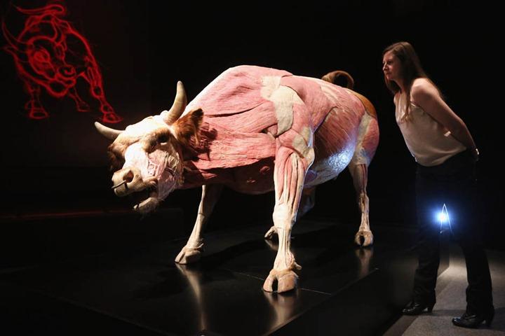 Тела животных на выставке в Лондоне