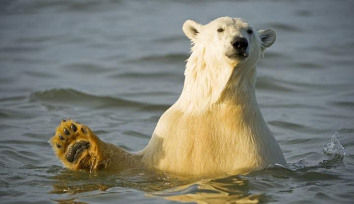 Красочные фотографии животных