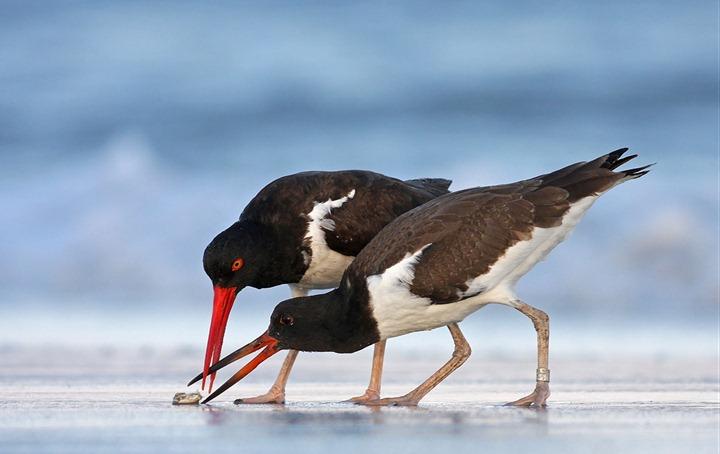 Фотографии дикой природы Veolia Environnement