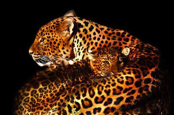 Дикие животные Patrick Bouquet