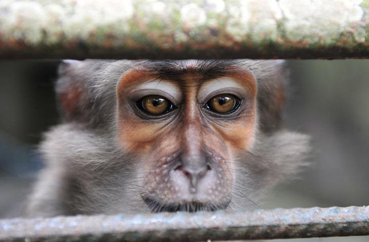 Фотографии животных от DayEvents #18