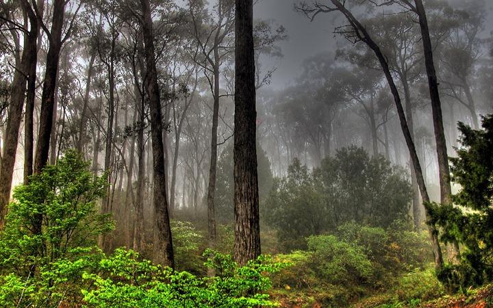 Красочные фотографии природы