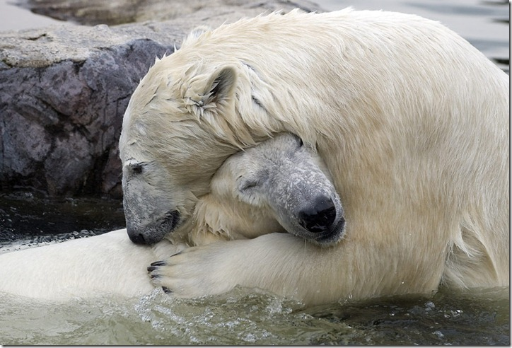 Животные, из разных зоопарков мира
