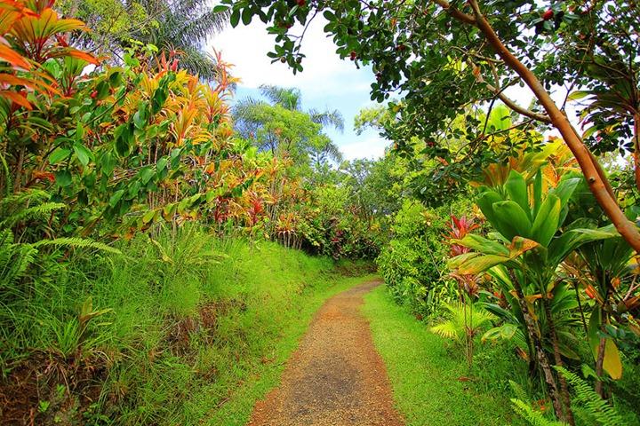 Чарующая красота садов на острове Мауи