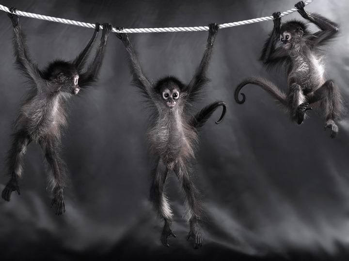 Фотограф животных Lennette Newell