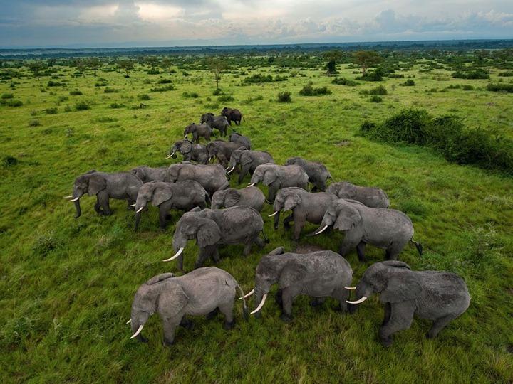 Фотографии животных от DayEvents #15
