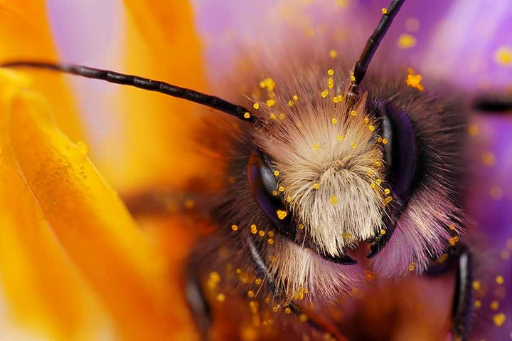 Макросъемка насекомых