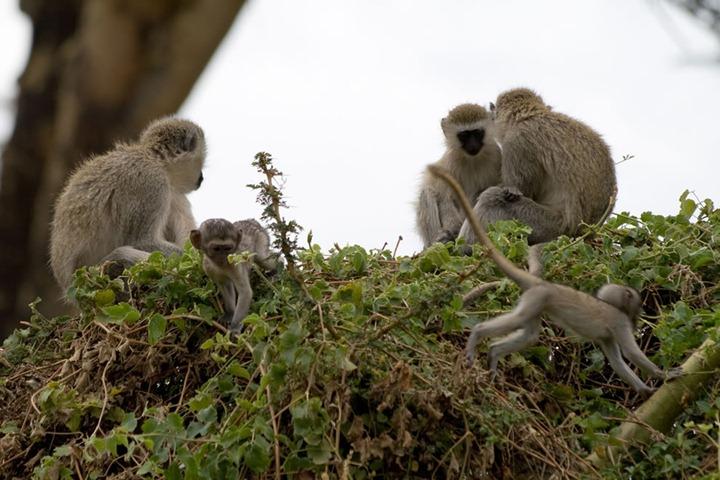 Животные сафари