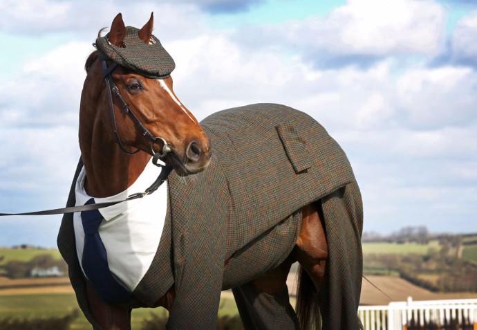 Морстид   модный конь в твидовом костюме