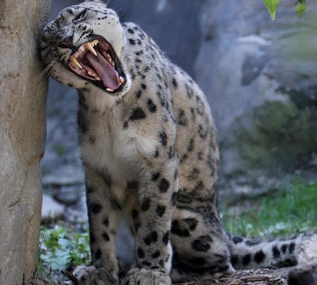 Невероятно красивые фотографии животных, созданные Sooper Deviant