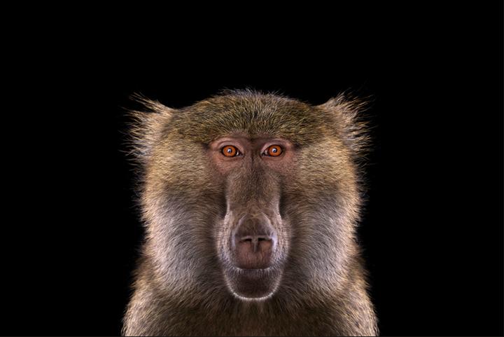 Портреты животных Brad Wilson