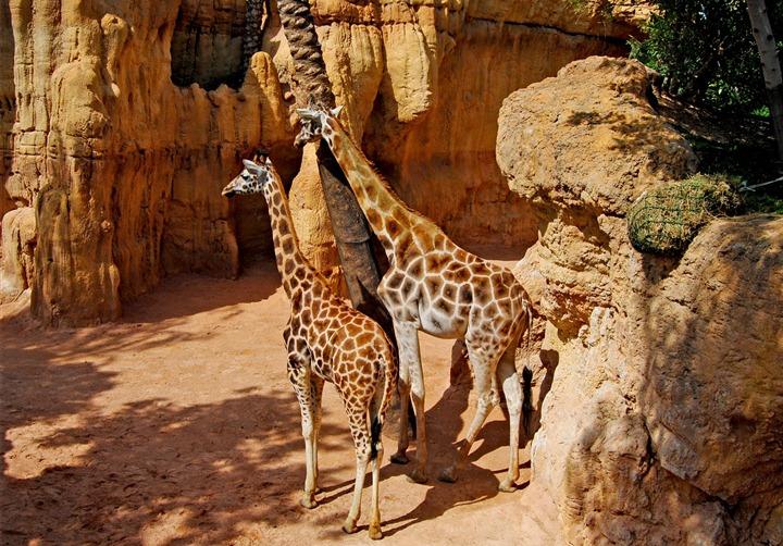 Биопарк Валенсии – крупнейший зоопарк Европы