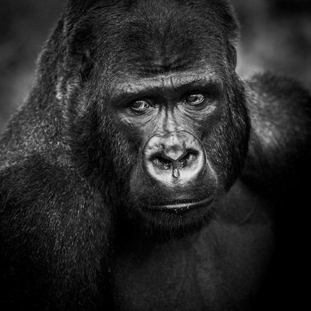 Фотографии диких животных в африке