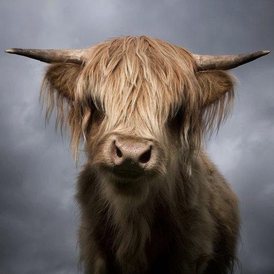 Портреты животных от David Boni