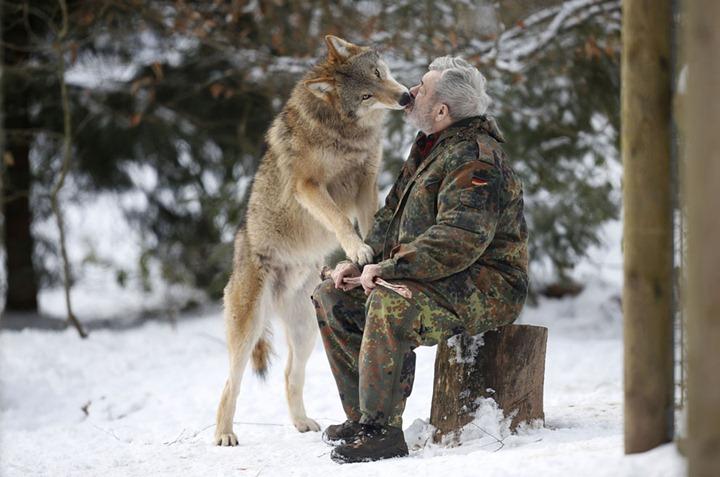 Человек   волк