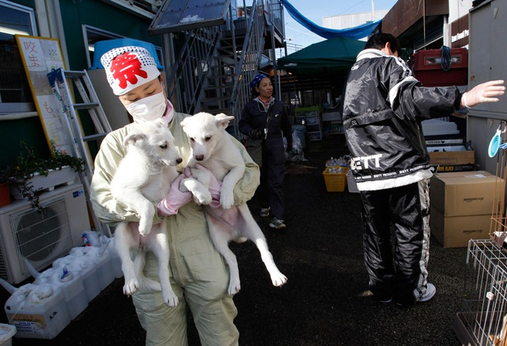 Спасение животных в районе Фукусимы