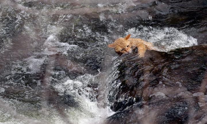 Фотографии дикой природы