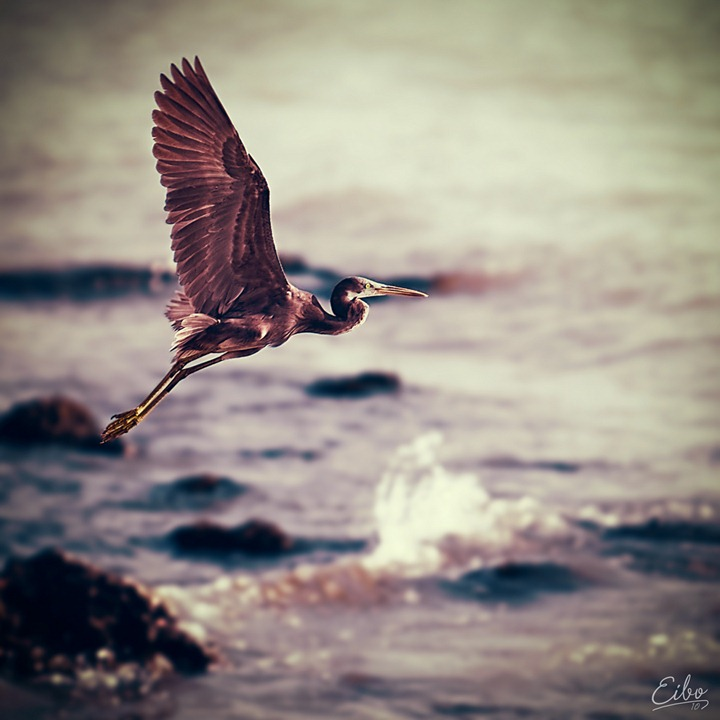 Фотограф Eibo