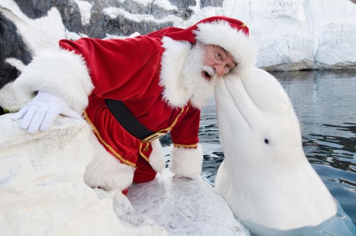 Санта Клаусы готовятся к Рождеству
